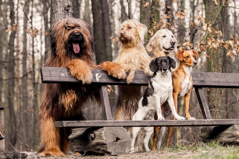 most dog friendly cities us